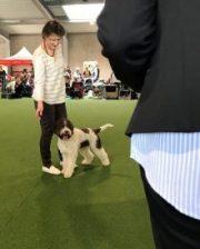 Barnaby an der Hundeausstellung