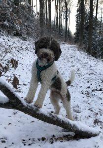 Baron Barnaby im Winter